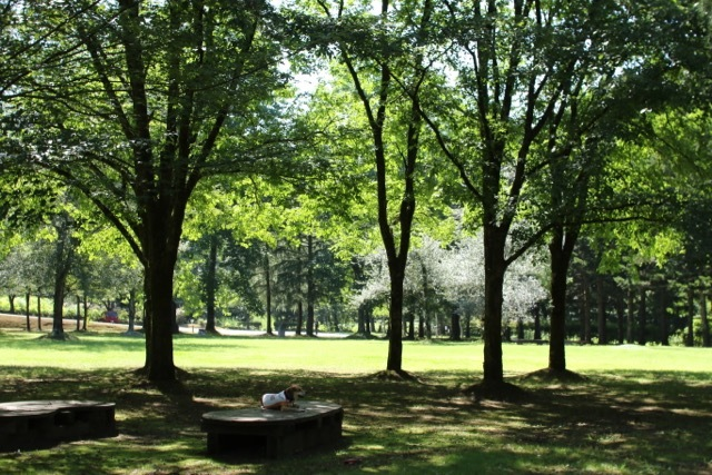 ハルニレの木の下で_b0031538_23201821.jpg