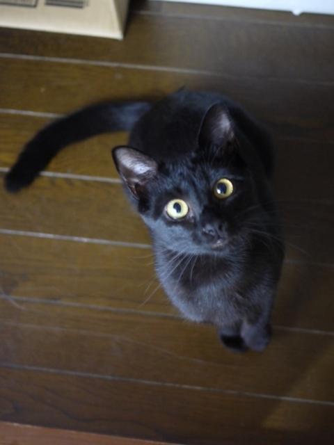 猫のお留守番 るんるんちゃん編。_a0143140_22025122.jpg