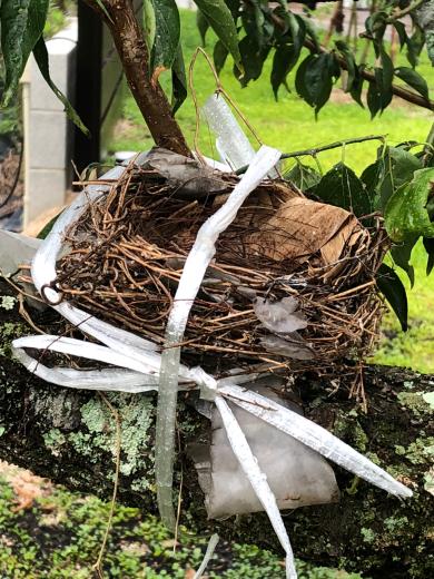 庭にある梅の木の剪定中に、ヒナが居る巣を落としてしまいました。_e0074251_07283143.jpg