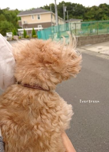 台風まえに道草🌀_d0362666_15111402.jpg