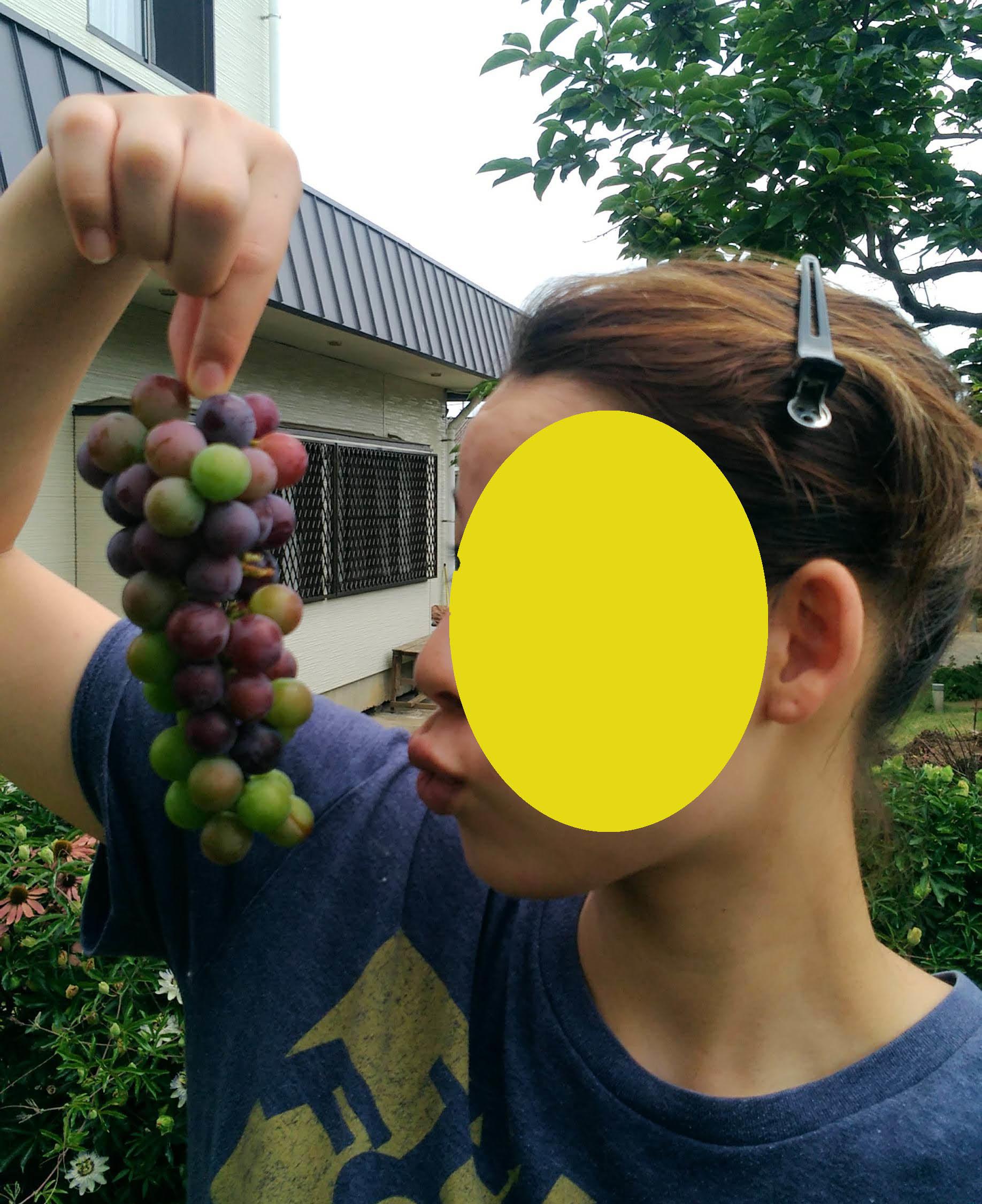葡萄のスチューベンの成長_c0197684_12550549.jpg