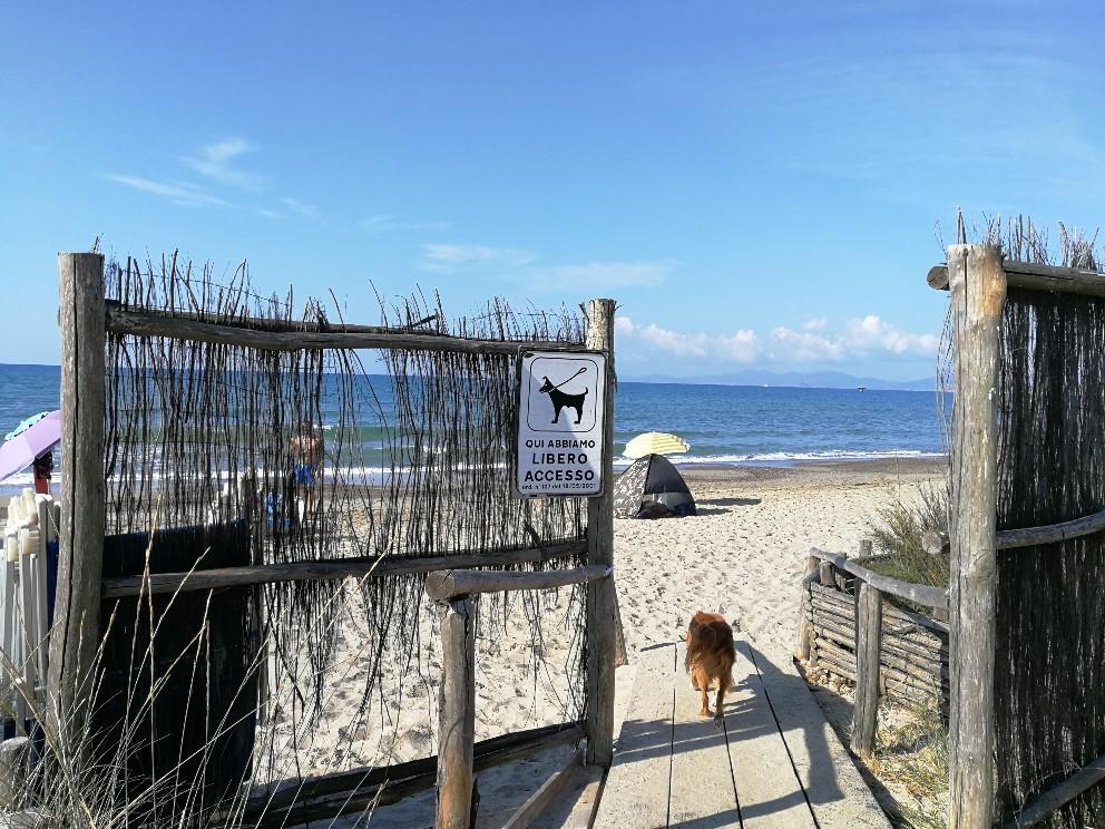ラーラ初体験!犬専用ドッグビーチ_f0106597_22324739.jpg