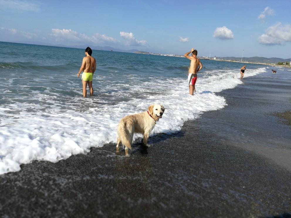 ラーラ初体験!犬専用ドッグビーチ_f0106597_23480639.jpg
