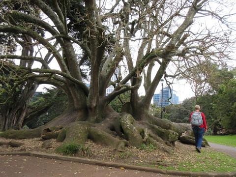 冬のニュージーランド旅(5)まだまだ飛べない Auckland_c0212604_9234882.jpg