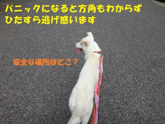 f0121712_01143831.jpg