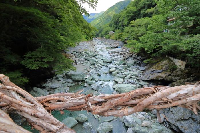 【祖谷のかずら橋】四国旅行 - 2 -_f0348831_16290496.jpg