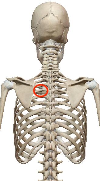 首こり・肩こり調整は、凝っていないところを見つけるのがポイントです 〜ある日の施術より〜_e0073240_11282128.jpg