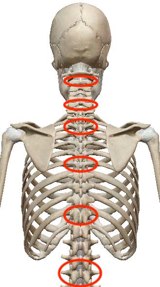 首こり・肩こり調整は、凝っていないところを見つけるのがポイントです 〜ある日の施術より〜_e0073240_11323815.jpg