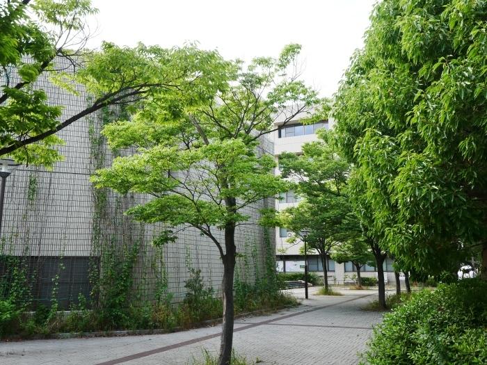 和歌山大学  2018-08-02 00:00   _b0093754_22084577.jpg