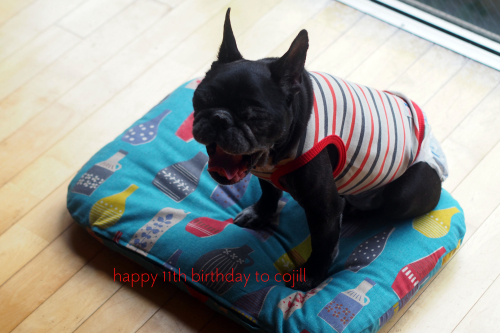dog goodsでHBD♡to Cojill_e0243765_19183028.jpg