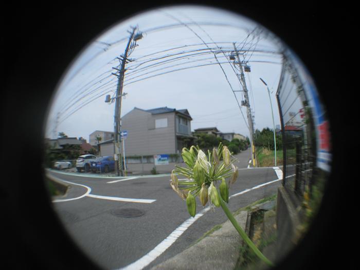 魚眼レンズ・・・なんちゃって。_f0159784_11005698.jpg