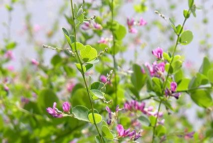 涼しげにハギの花が咲いています_b0145296_14540473.jpg