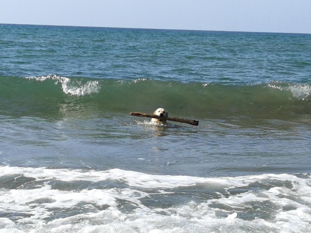 ラーラ初体験!犬専用ドッグビーチ_f0106597_00015498.jpg