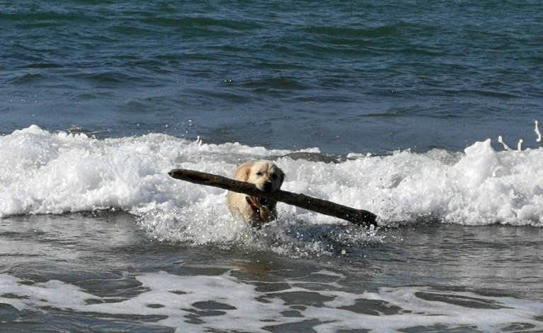 ラーラ初体験!犬専用ドッグビーチ_f0106597_04192116.jpg