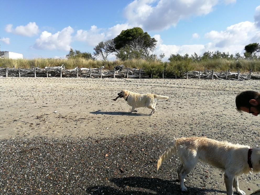 ラーラ初体験!犬専用ドッグビーチ_f0106597_18223387.jpg