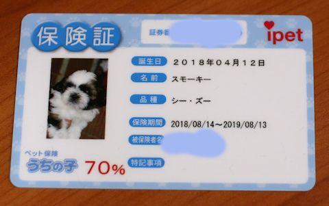スモーキーの保険証が届いたよ。_c0090198_19224608.jpg