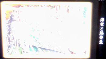 b0044404_19402511.jpg