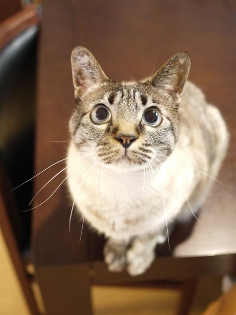 猫のお留守番 ルノーちゃん編。_a0143140_22475944.jpg