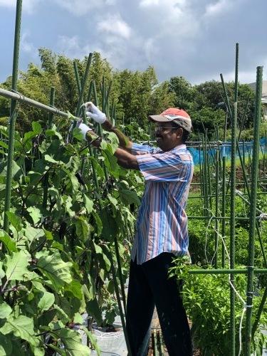 台風一過・・トマトは割れて 茄子の櫓斜めに 今朝の圃場はサウナのような状態_c0222448_11274860.jpg
