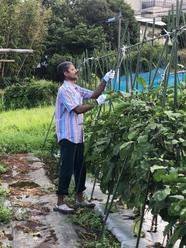 台風一過・・トマトは割れて 茄子の櫓斜めに 今朝の圃場はサウナのような状態_c0222448_11275910.jpg