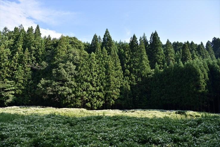 岡田の谷の半夏生園_e0170058_13180614.jpg