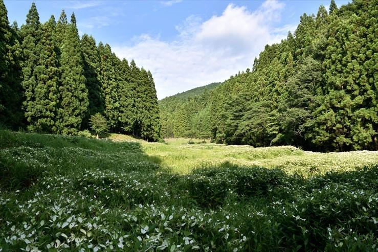 岡田の谷の半夏生園_e0170058_13180642.jpg