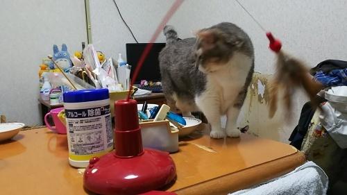 新しい猫じゃらし_b0112380_22151518.jpg