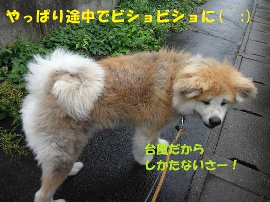 f0121712_00074340.jpg