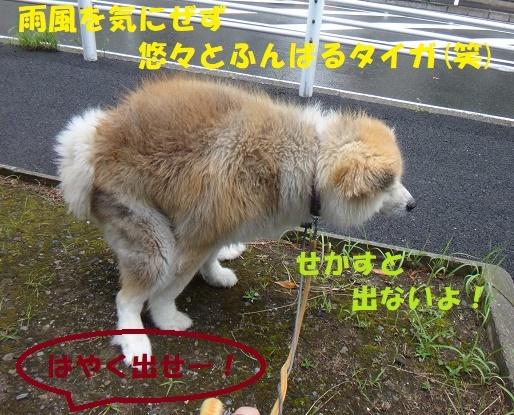 f0121712_00113213.jpg
