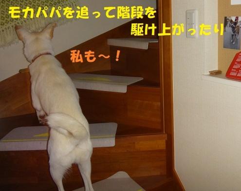 f0121712_00383660.jpg