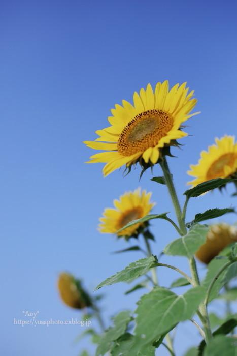 Enjoy summer !_e0347431_00005883.jpg