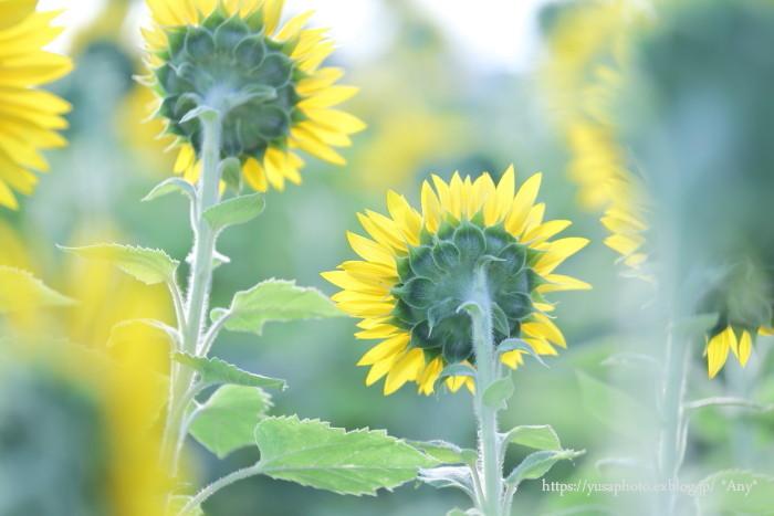 Enjoy summer !_e0347431_00010796.jpg