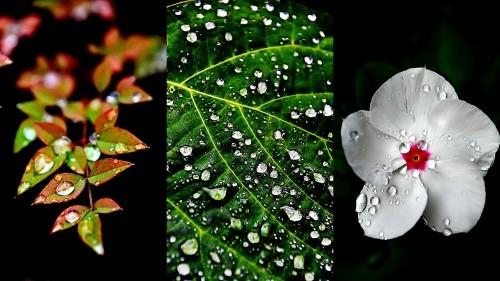 雨上がりはいつも・・・_b0314043_07510880.jpg