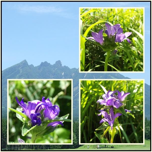 白岩山へ・・キレンゲショウマ_e0164643_15523228.jpg