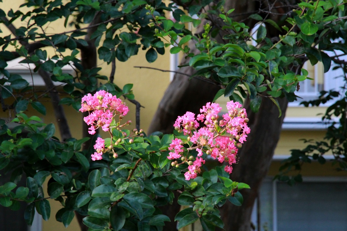 植物園なのって聞かれるマイガーデン_a0107574_17350832.jpg