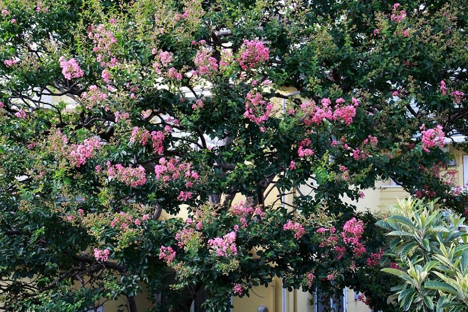 植物園なのって聞かれるマイガーデン_a0107574_17351710.jpg