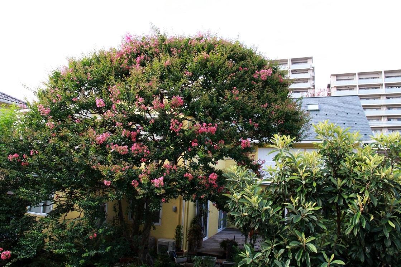 植物園なのって聞かれるマイガーデン_a0107574_17353023.jpg