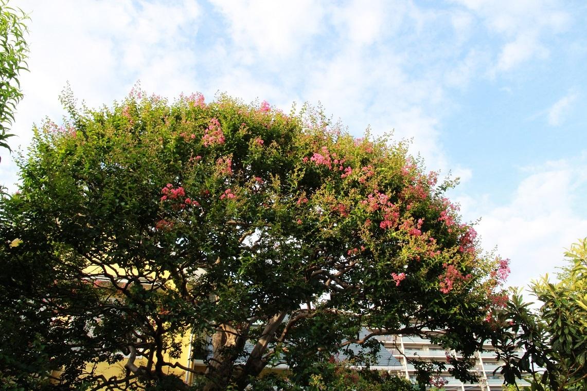 植物園なのって聞かれるマイガーデン_a0107574_17353825.jpg