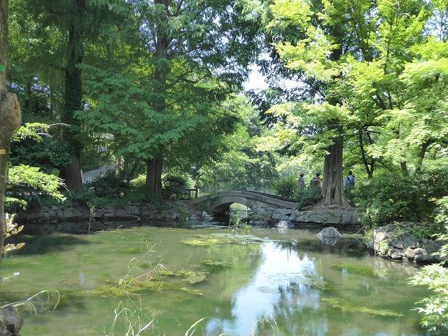 井の頭公園に行ってみたけれど♪ 吉祥寺も暑さ半端なくギブアップ!_b0287088_17444261.jpg