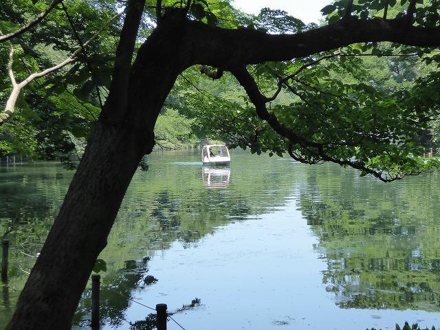 井の頭公園に行ってみたけれど♪ 吉祥寺も暑さ半端なくギブアップ!_b0287088_17463841.jpg