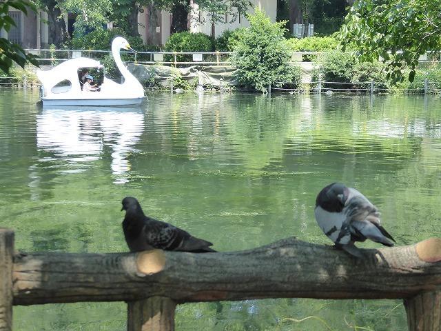 井の頭公園に行ってみたけれど♪ 吉祥寺も暑さ半端なくギブアップ!_b0287088_17474005.jpg
