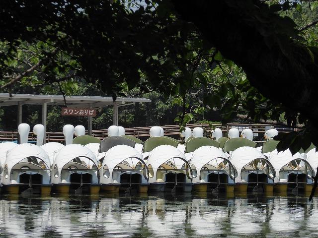 井の頭公園に行ってみたけれど♪ 吉祥寺も暑さ半端なくギブアップ!_b0287088_17485869.jpg