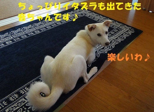 f0121712_00141071.jpg
