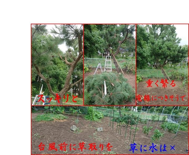f0379722_16000416.jpg