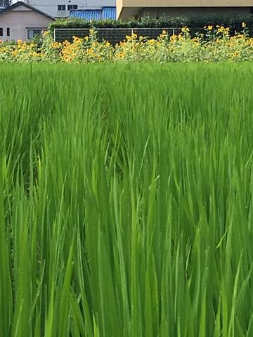 green & yellow_d0245357_10100588.jpg