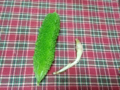 収穫_f0395164_15413081.jpg