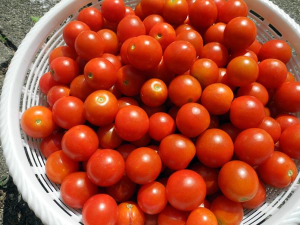 トマトの炭酸割り_b0052471_19120975.jpg