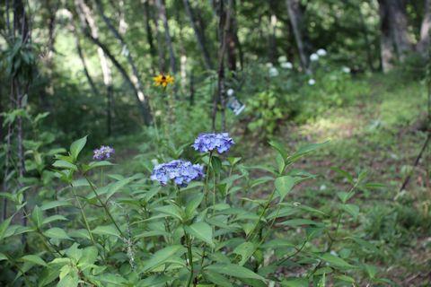 庭のお花たち♪_c0090198_17330628.jpg