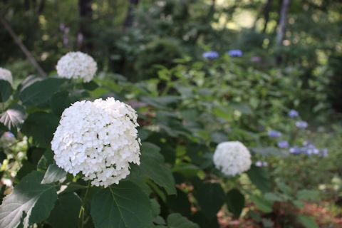 庭のお花たち♪_c0090198_17340945.jpg