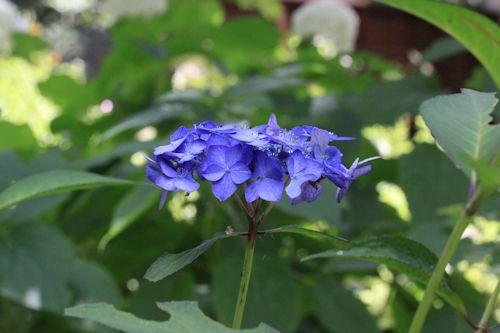 庭のお花たち♪_c0090198_17362695.jpg